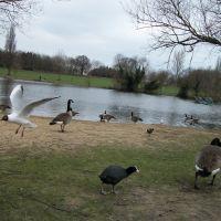 wild birds..., Бексли