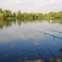 Manor Farm Fishing Lakes, Бистон