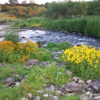 Flowers after Flood on the wear at the Dam Head Bishop Aucland 2007, Бишоп-Окленд