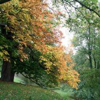 Autumn colours, Бишоп-Окленд