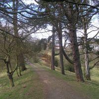 A path through the Bishops Park, Бишоп-Окленд