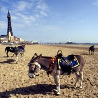 donkey derby, Блэкпул