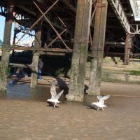 Two birds., Блэкпул