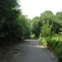 Path into Clements Wood, Брентвуд