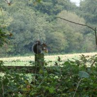 Squirell, Upton Country Park, Poole, Ватерлоо