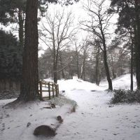 Creekmoor Wood, Ватерлоо