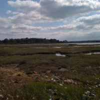 Marsh at Poole, near Upton Country Park, Ватерлоо