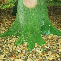 Green tree, Ватерлоо