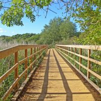 The bridge to Upton Country Park, Ватерлоо