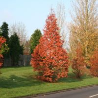Autumn, Вокинг