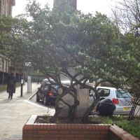 Nice tree near Wolverhampton University, Вулвергемптон