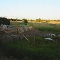 Cattle holding pen., Голборн