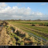 Open fields, Голборн