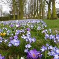 Grimsby peoples Park Crocus, Гримсби