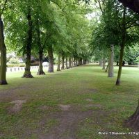Grimsby peoples Park Long Row of Trees, Гримсби