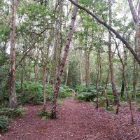 Woods, Грисби