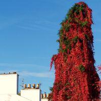Red Tree, Дерби