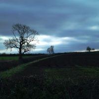 Trees on the field boundry near Sibson., Истлейг
