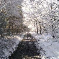 SNOW SCENE, Каннок