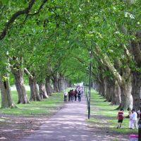 Under the trees, Кембридж