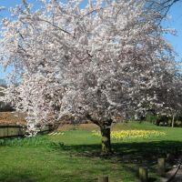 2012-03-28 park przy Stourport Road, Киддерминстер