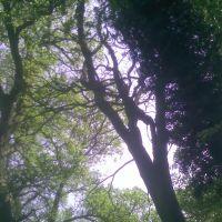 Corby, trees, Корби