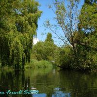 Avon near Christchurch - Willows and Ripples, Кристчерч