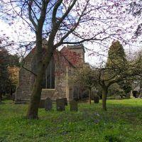 Sibson village churchyard is full of trees., Лейг