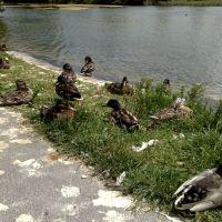 Duck Stop, Литерхед