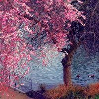 london spring, Лондон