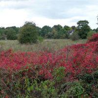 Red autumn, Майденхед