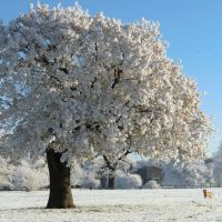 Frost blossom, Нортгемптон