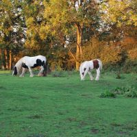 Horses,Newark-on Trent,England, Ньюарк