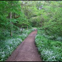 Walking in Castle Eden Dene, Петерли