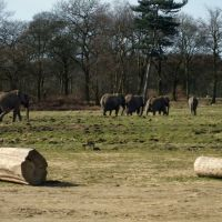 Knowsley Safari Park - Elephants, Прескот