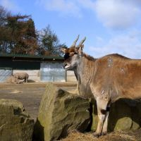 Knowsley Safari Park - Oryx and Rhinos, Прескот