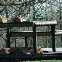 Knowsley Safari Park, Прескот
