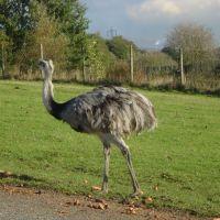 An EMU, Прескот