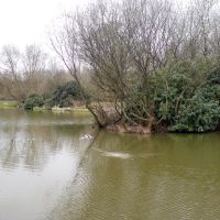 Pond at Carr Lane, Huyton, Прескот