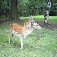 Knowsley Safari Park, Prescot, Прескот