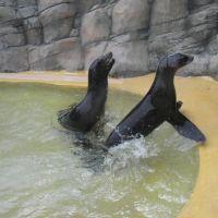 Sea Lions, Прескот