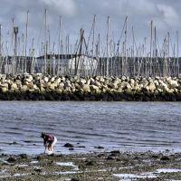 raking for mussels, Пул