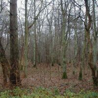 Chambers Wood - Old Limewoods Near Bardney, Рагби