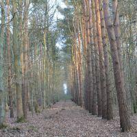 Chambers Farm Wood 3., Рагби