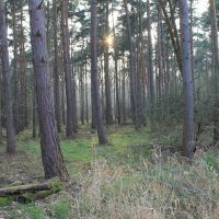 Chambers Farm Wood 5., Рагби