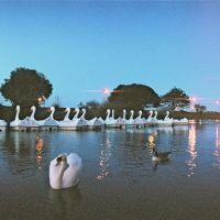 Swans at Dusk, Райд