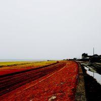 Red Sand, Редкар