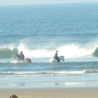 SEA HORSES, Редкар