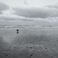 Redcar - Lonely Dog, Редкар