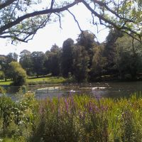 Priory Park Lake (3), Рейгейт